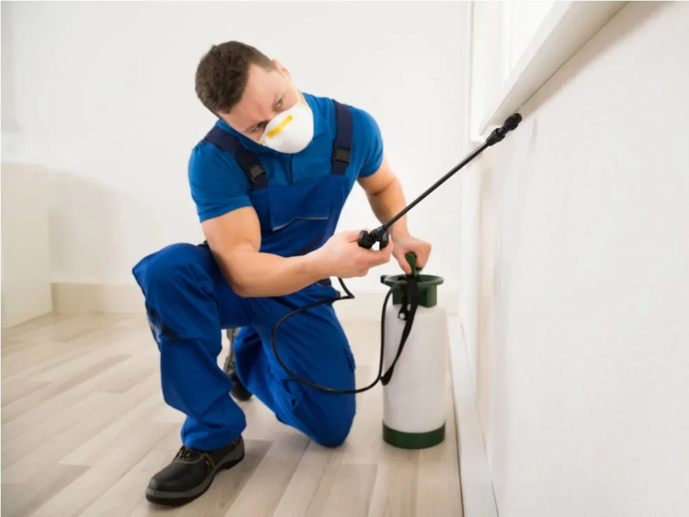 Factors To Consider When Choosing A Pest Control Company