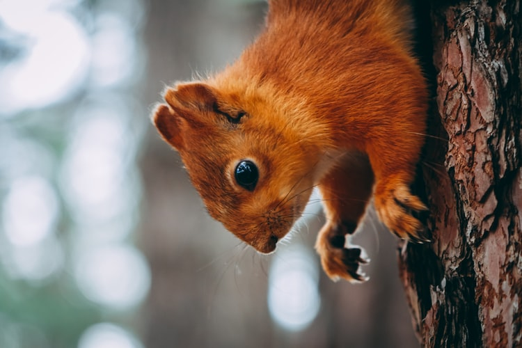 Tips To Hire A Flying Squirrel Removal Service