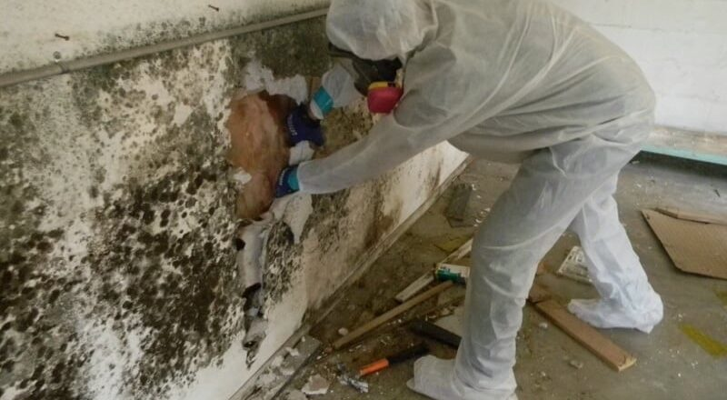How is Mold Abatement Done?