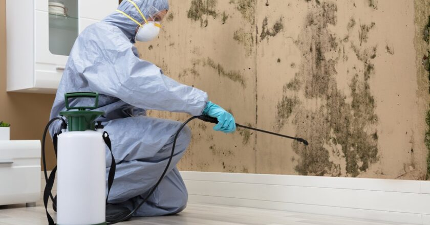 Why Should You Hire an Expert Mold Remediation Company?