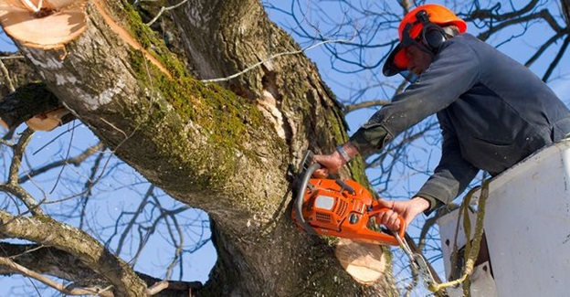 Arborists Melbourne – One Of The Best Professionals