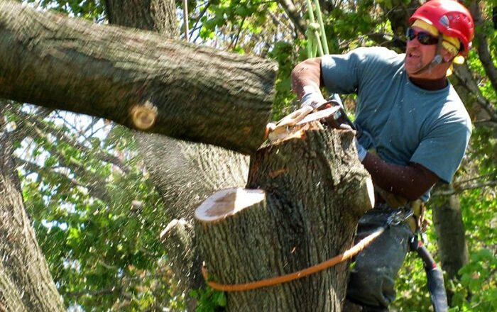 The Benefits of Hiring a Professional Tree Removal Company