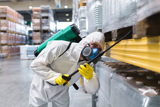 Why Should You Avail of Pest Control Services?