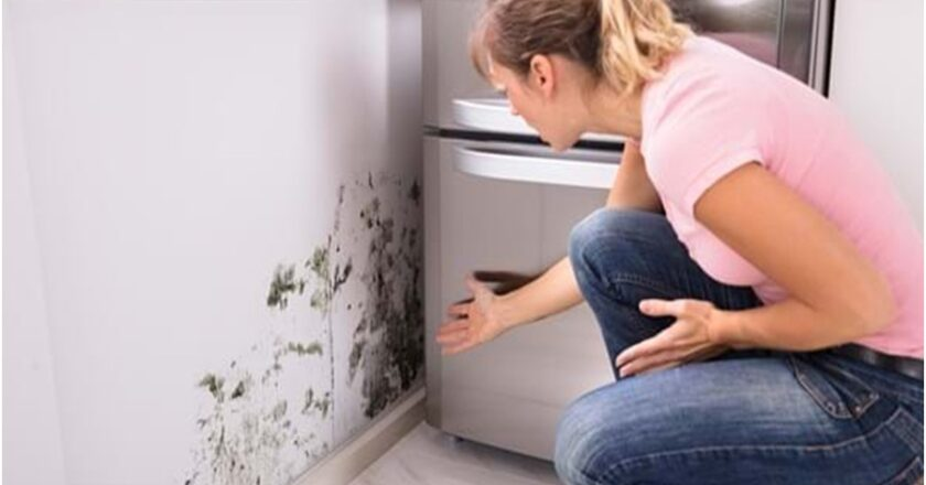 Why is mold inspection necessary?