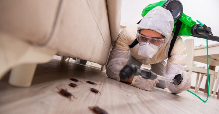 How To Find The Best Pest Control Company In London